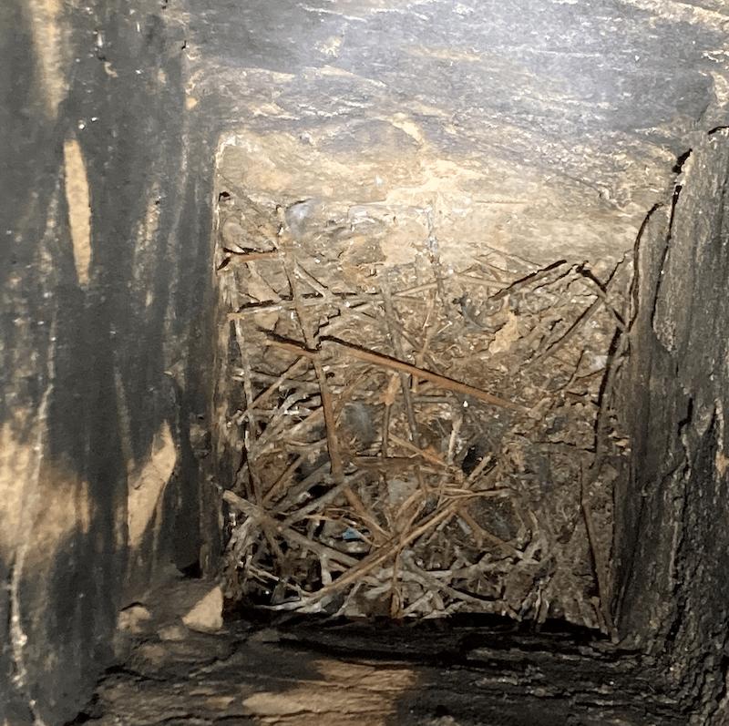 Bird nest in chimney